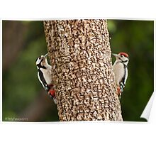 Woodpecker Mirror? Poster