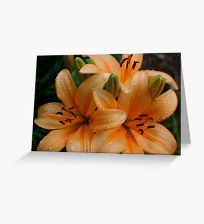 Lily Drops Greeting Card
