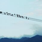 Birds on telephone line by colettelydon
