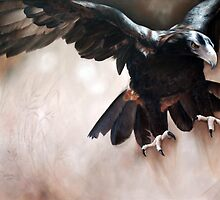 """Alight - The Wedge-tailed Eagle"" by Michelle Caitens"
