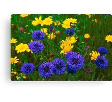 Blue Cornflowers in a Devon Meadow, U. K. Canvas Print