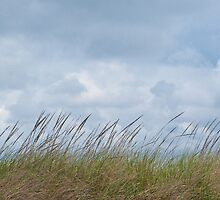 dune grasses; coastal central Oregon by David Chesluk
