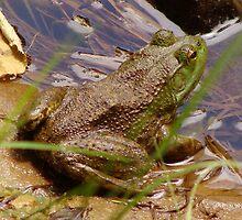 Feelin' Froggy by vigor