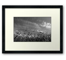 Nature in black and white II Framed Print