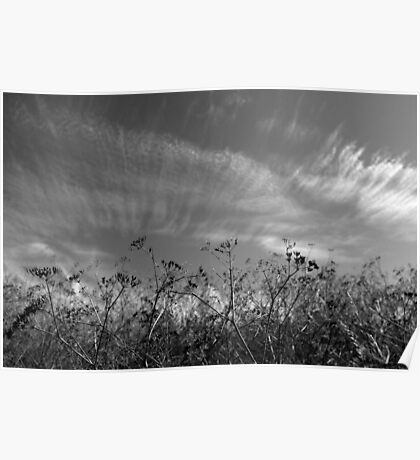 Nature in black and white II Poster