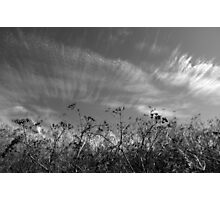 Nature in black and white II Photographic Print