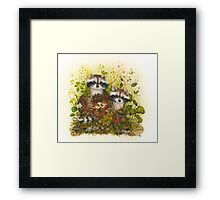 Young Racoons  Framed Print