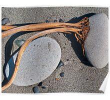 kelp holdfast on Oregon beach Poster