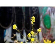 urban revitalization Photographic Print