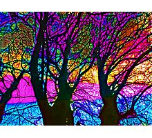 Chestnut Skies Photographic Print
