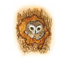Watchful Owl  Photographic Print