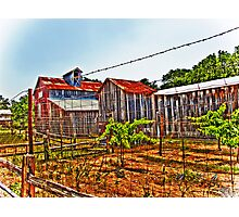 Sisterdale Winery Photographic Print