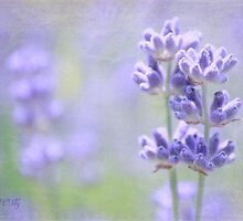 Pair of lavender by aMOONy