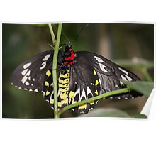 Pretty Moth on a Tree Branch Poster