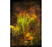 Forbidden Garden Photographic Print