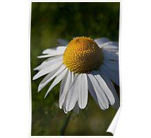 daisy days (2) Poster