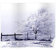 Frost covered tree with fence Poster