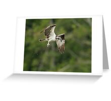 Osprey with her Prize Greeting Card