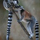 """""""In Respect of the Ring-tailed Lemur"""" by Michelle Caitens"""