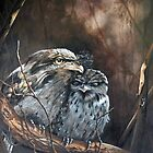 """""""Tawny Evening - Tawny Frogmouths"""" by Michelle Caitens"""