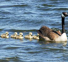 The family swim by cherylc1