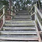 """""""GOING UP!' Not yet it's so lovely on the beach,Bribie Island. by Rita Blom"""