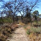 Footpath in the Bushveld by Elizabeth Kendall