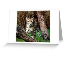 """""""On The Prowl"""" Greeting Card"""