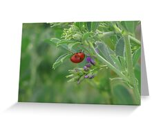 """Ladybug"" Greeting Card"
