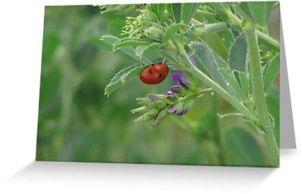 """""""Ladybug"""" by dfrahm"""