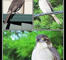 ~ Butcher Bird ~ by Donna Keevers Driver