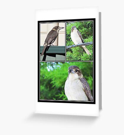 ~ Butcher Bird ~ Greeting Card