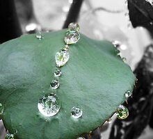 Green rose leaf after rain by ShineArt
