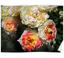 Amazing Roses # 1. Poster