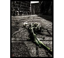 Dying Among The Dead Photographic Print