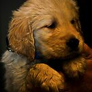 I Am a Puppy by Nancy Stafford