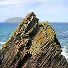 Pointing the way by CliveOnBeara
