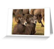 Loungn' Rams Greeting Card