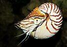 Underwater Creature by Svetlana Sewell