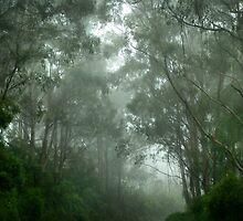 Cape Otway Fog by ShineArt