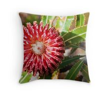 110619 Lesueur National Park Banksia Menziesii Throw Pillow