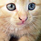 Ginger Cat by colettelydon