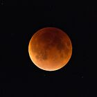 Blood Moon Eclipse,  Brookline,MA by LudaNayvelt