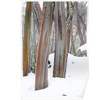 Mt Erica Snow Gums Poster