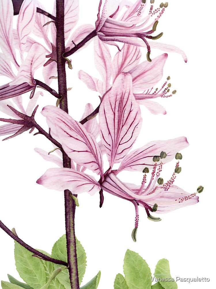 Dictamnus albus by Vanessa Pasqualetto
