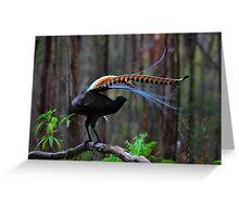 Superb Lyrebird Greeting Card