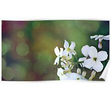 Bokeh Flowers Poster