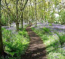A Fairytale Pathway by Braedene