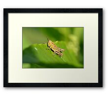 Soaking Up The Rays. Framed Print