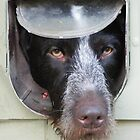 Dog in a Flap by James Hogarth